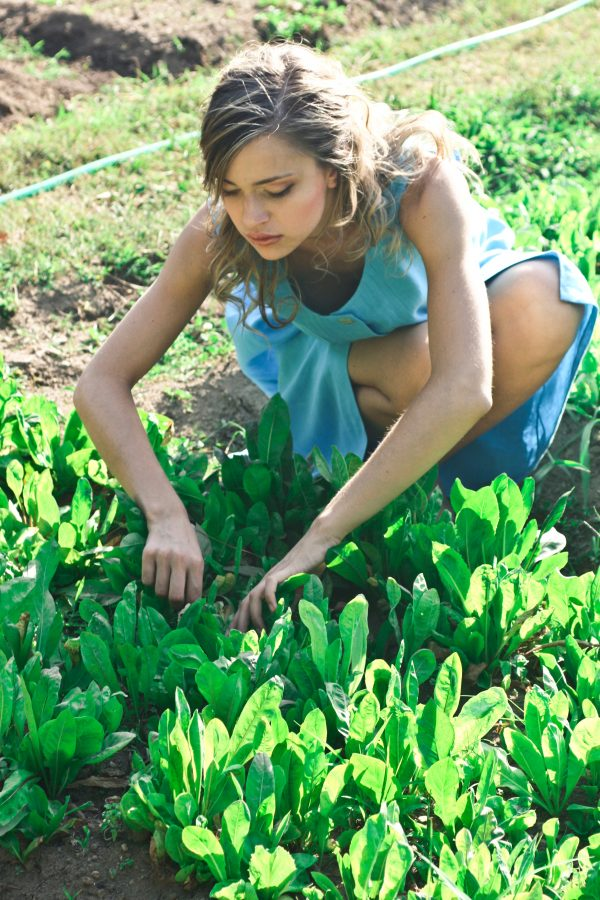 gardening with seeds